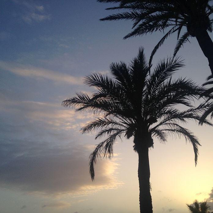 Marbella febrero 2016 (7)