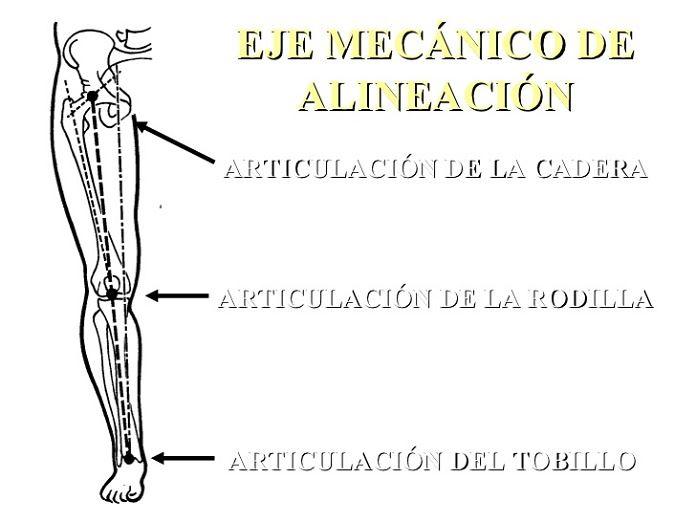 articulaciones-miembro-inferior-2-728